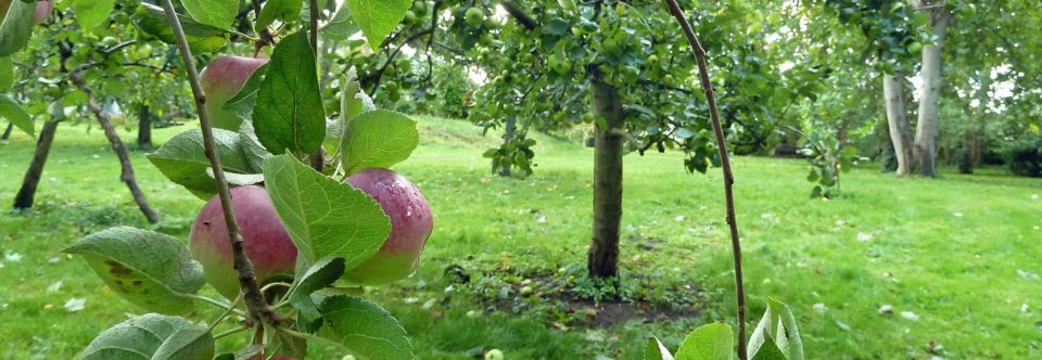 Apple Day: Saturday 28th September, 10.30am to 3pm