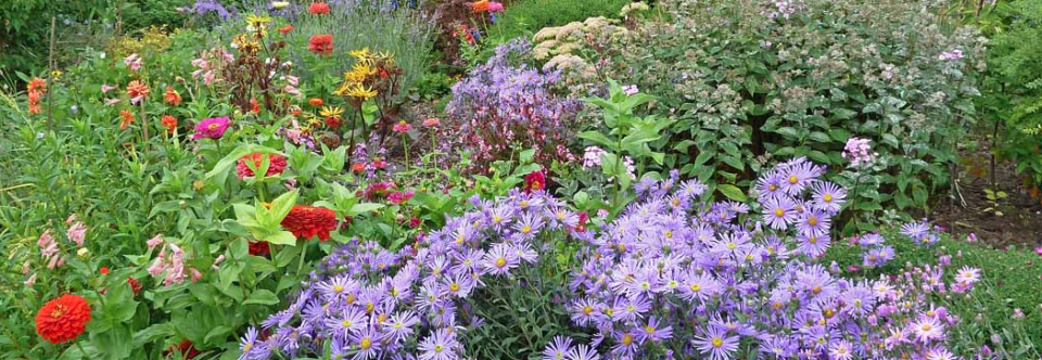 NGS Open Gardens: Sunday 28th June and Sunday 5th July, noon to 5pm